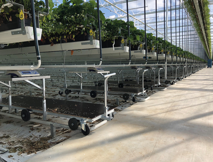 products Hortiworld Harvest trolleys